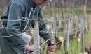 Le Chardonnay en Beaujolais ou Mâconnais : Pascal Berthier connaît!