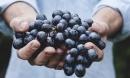 Millésime Bio, world organic wine fair