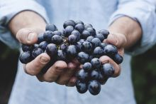 Les vins Bios à l'honneur !
